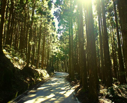 |山林|國內員工旅遊/雪霸國家公園觀霧